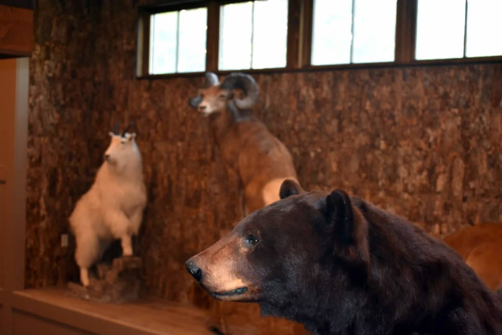 Taxidermy And Antler Mounting Services