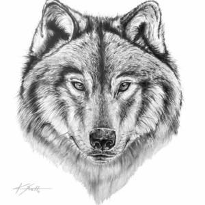 "K. Scott ""The Wolf"" Canvas Framed 24″x 36″ Print Artwork"